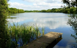 New website for Dinton Pastures Country Park